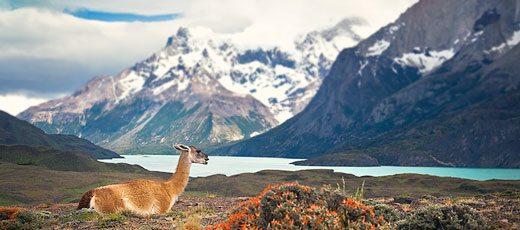 torres-del-paine chili que voir au chili tourisme responsable ecotourisme