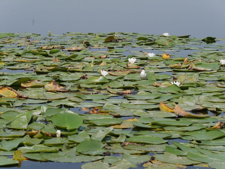 bile lake ukraine delta dniestr