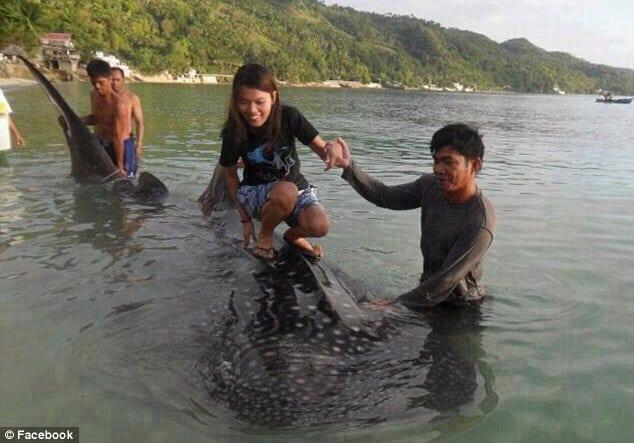 mauvais tourisme requin baleine en danger