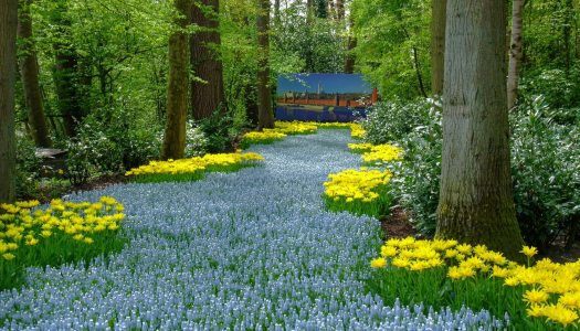 Les 6 meilleurs endroits à voir aux Pays-Bas en dehors d'Amsterdam