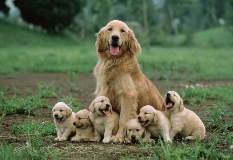 Image result for dog fathers
