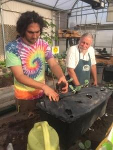 Greenhouse Caja planting
