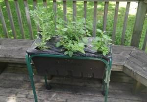 caja tea garden box