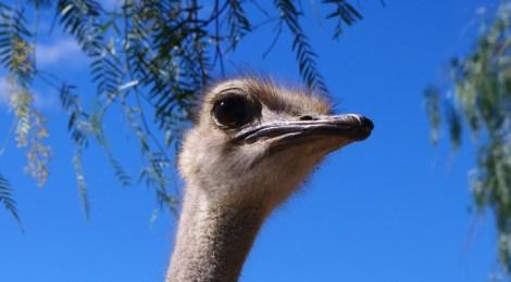 Ostrich riding on our #SAroadtrip