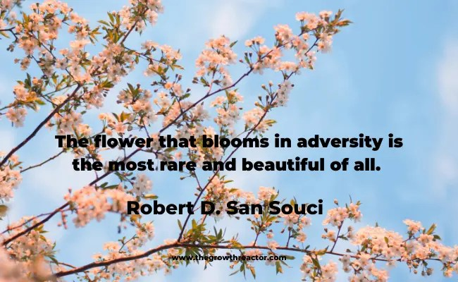 quote about blooming like a flower