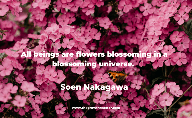 quotes about blooming