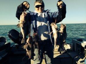 Black Sea Bass