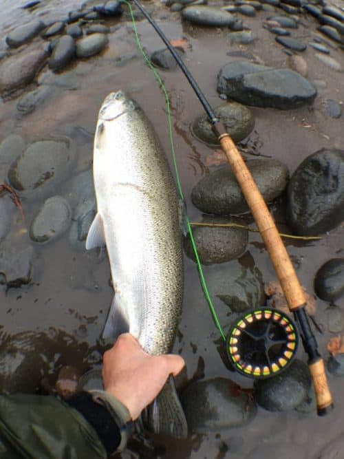 Clackamas and Sandy River Fishing Reports and Forecast October 18th, 2019