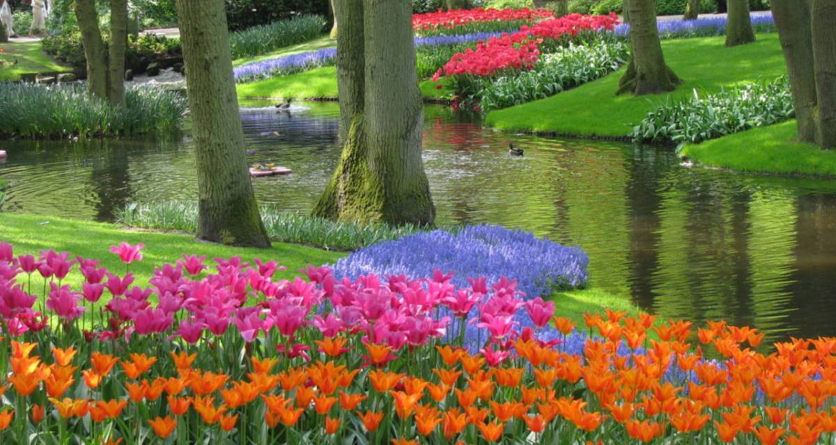 Dutch News Podcast – The Infected Tulip and Painted Zwerfkei Edition