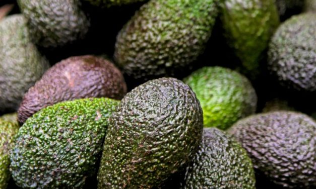 Avocados more popular than ever but at an environmental cost