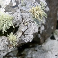 Trouble with lichen