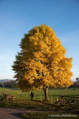 Autumn at Killerton - The Hall of Einar - photograph (c) David Bailey (not the)