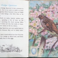 The Second Ladybird Book of British Birds #1 - The Hedge Sparrow