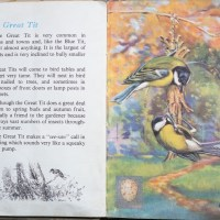 The Second Ladybird Book of British Birds #6 - The Great Tit