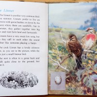 The First Ladybird Book of British Birds – #7 The Linnet
