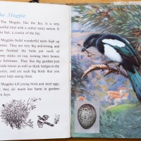 The First Ladybird Book of British Birds - #9 The Magpie