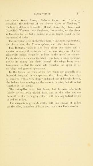 Black Veined White - The History of British Butterflies