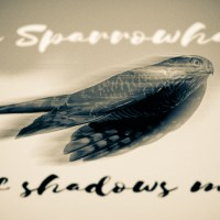 The Sparrowhawk is of shadows made