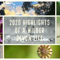 2020 highlights of a wilder Devon life - part 2