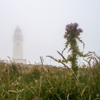Noup in the mist