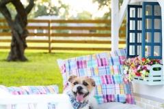 doghouse_revamp_little_tikes