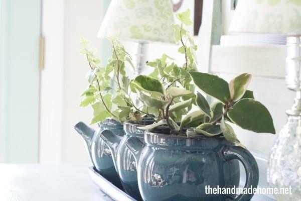 plants_indoors