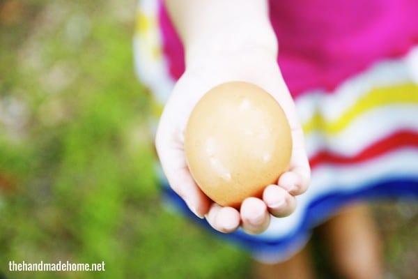 fresh_organic_eggs