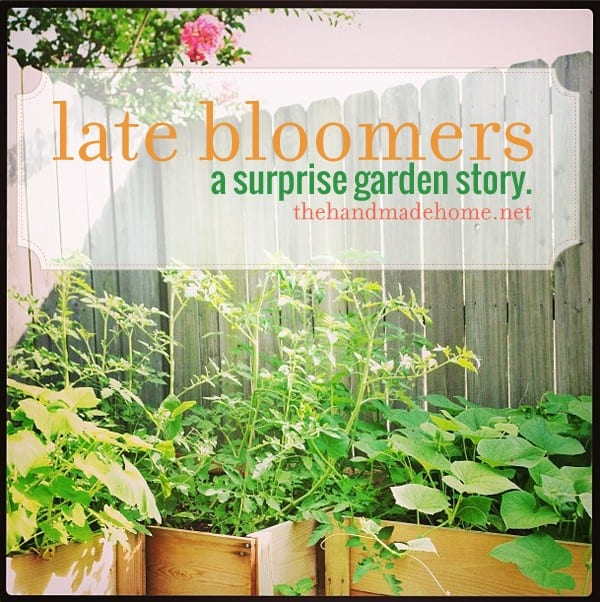 late_bloomers