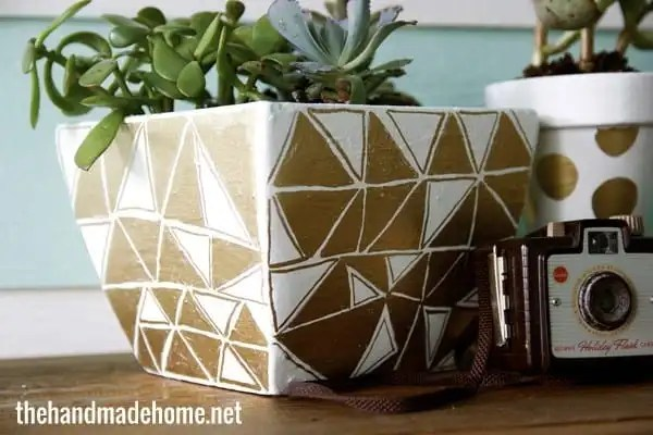 geometric_succulents