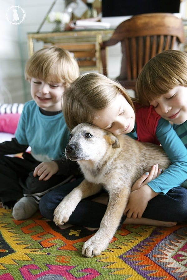 kids_and_puppies