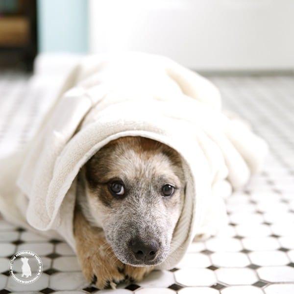 puppy_bath