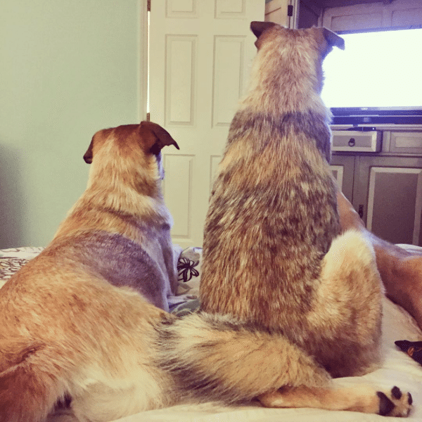 tv_with_dogs