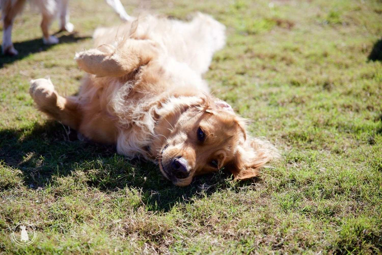 dog_park_fun