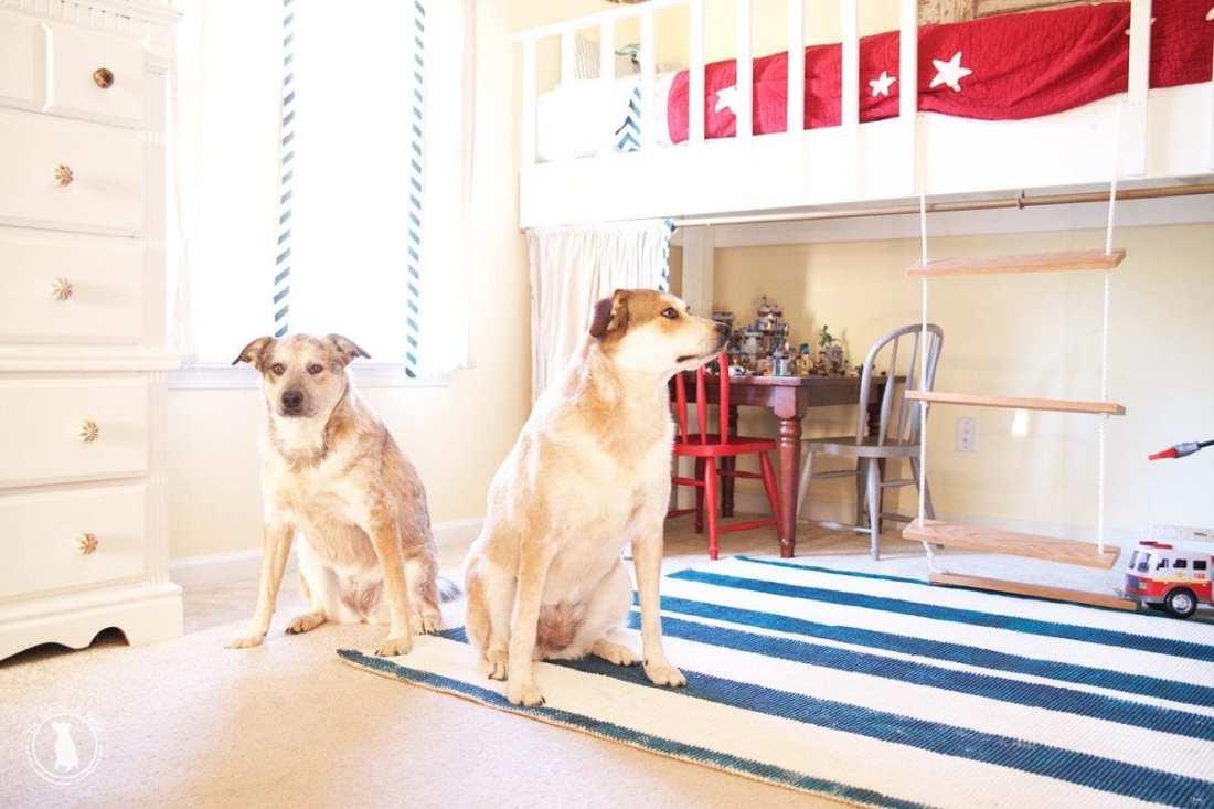 rescue_pups