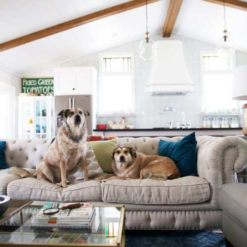 how to keep your house clean {with two massive dogs}