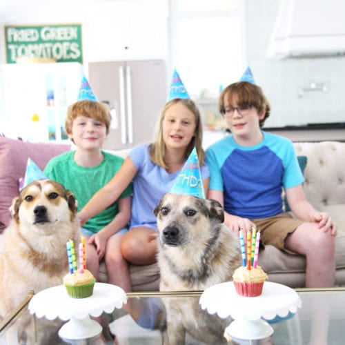happy birthday, rigby + fitz: an honest look, four years later