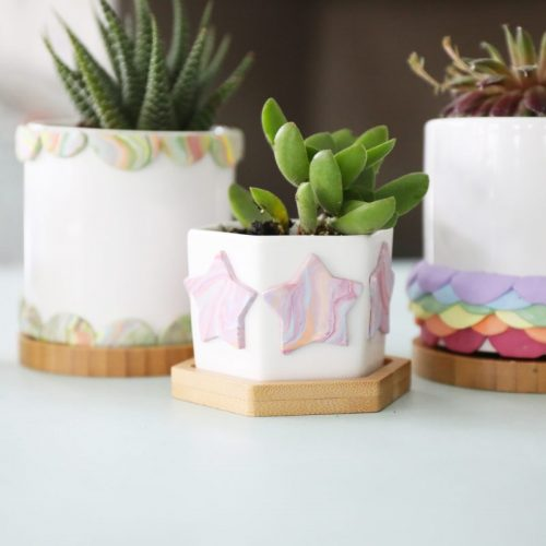 easy colorful succulent containers