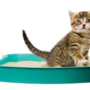 Product Review: Cat Litter Types & Tips   The Happy Beast