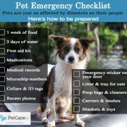 Disaster Preparedness for Pets   The Happy Beast