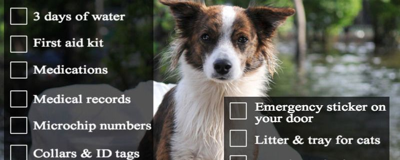 Disaster Preparedness for Pets | The Happy Beast