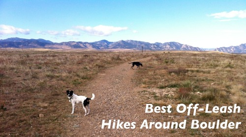 Best Off-Leash Dog Hikes Near Boulder | The Happy Beast
