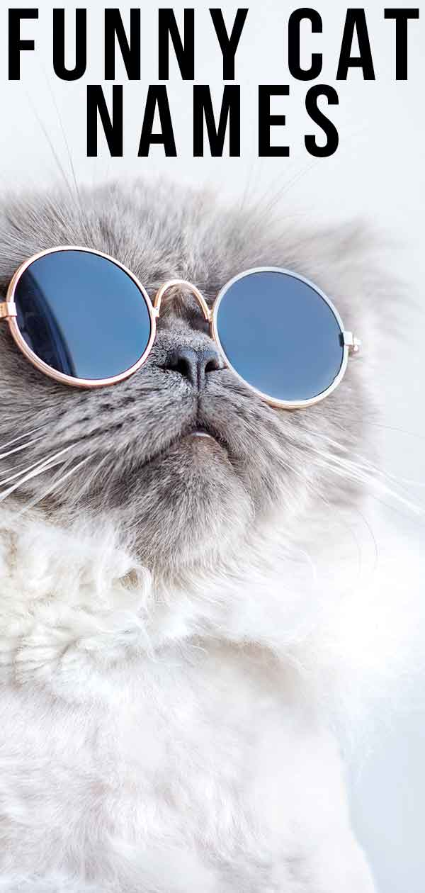 100 Cat Captions For Instagram Meow