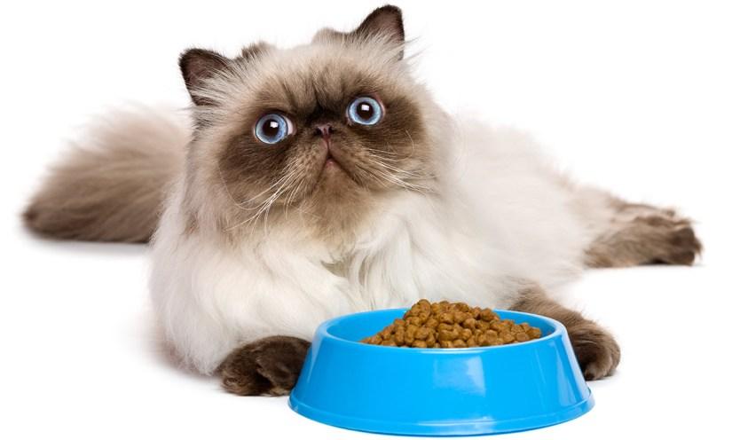 Gambar Kucing Lucu Yang Menggemaskan