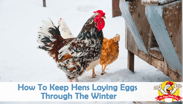 How To Keep Hens Laying Eggs Through The Winter Blog Cover