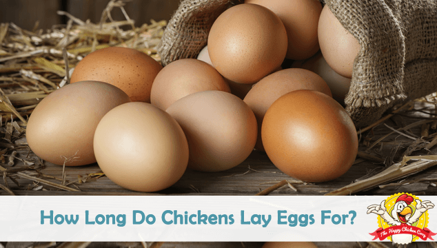 How Long Do Chickens Lay Eggs For Blog Cover