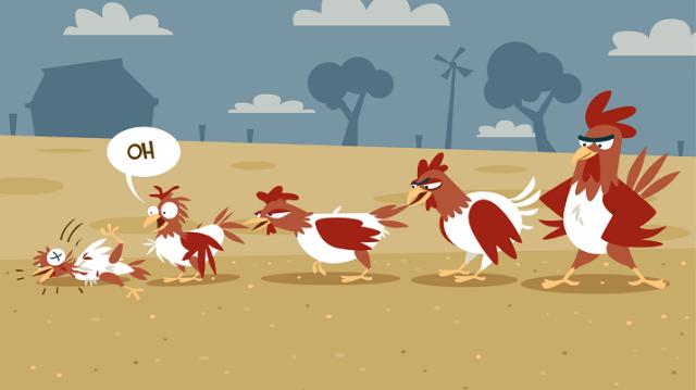 Chicken Bullying Behavior
