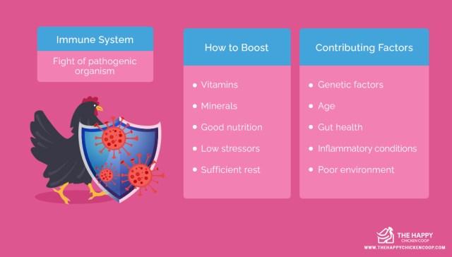 Chickens Immune System