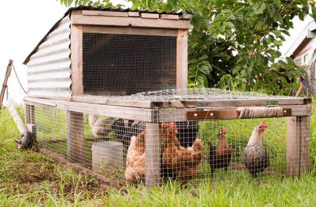 Chicken Tractor Example