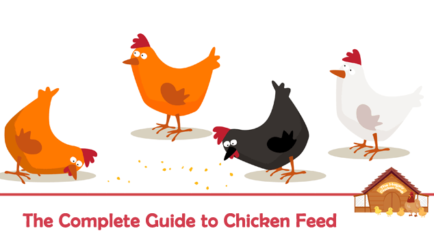 The Complete Guide to Chicken Feed Blog Cover