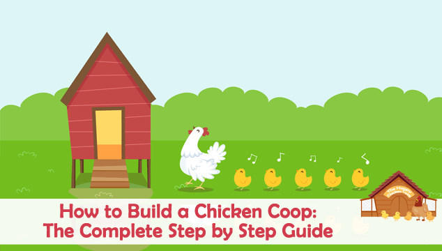 How To Build A Chicken Coop Blog Cover